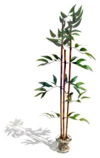 Curiosidades scout manada shanti - Reproduccion del bambu ...